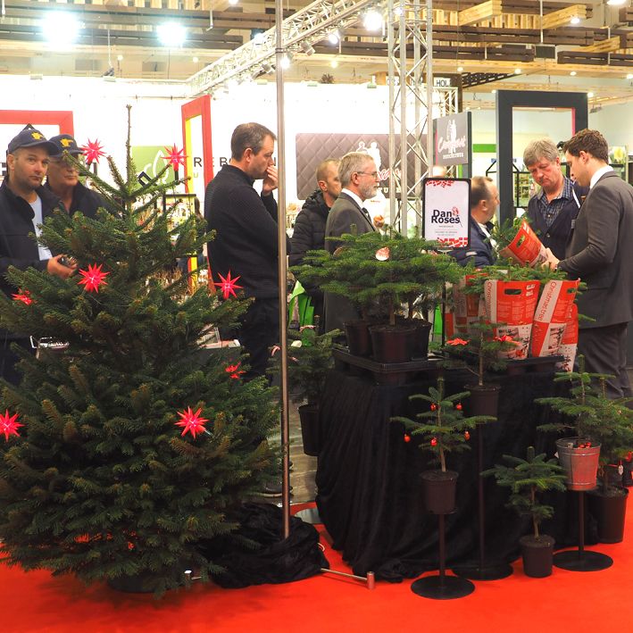 Great interest in small Christmas trees