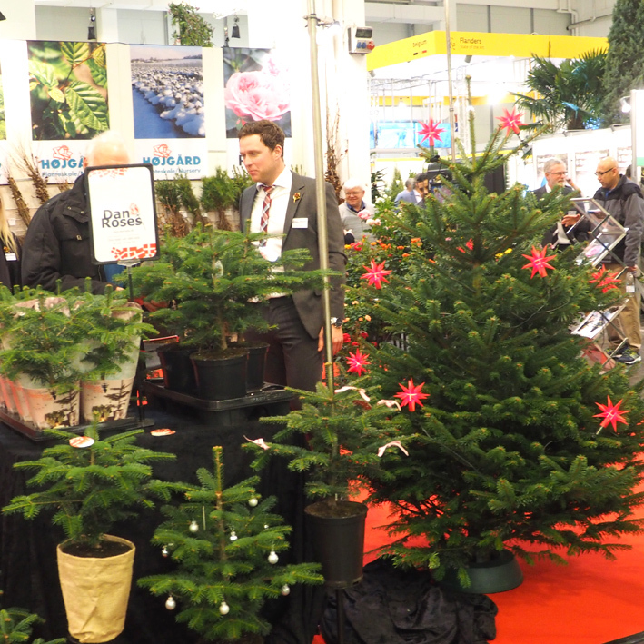 Christmas trees - large and small