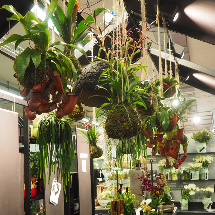 Trendy hanging plants