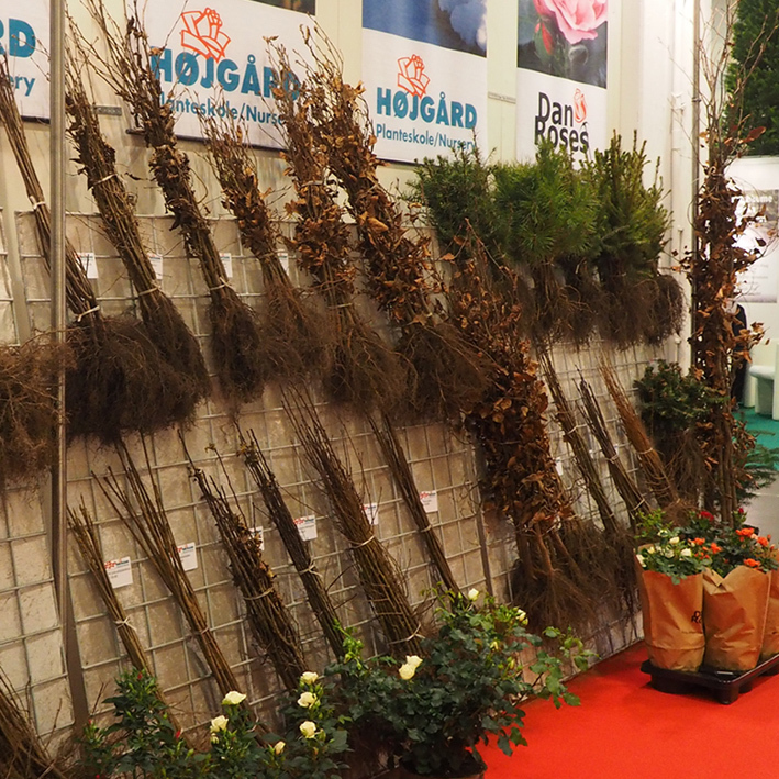 Bare rooted plants on show